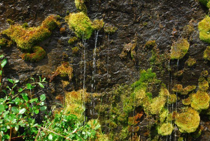 Plant life moss on rock. By Signe Vest