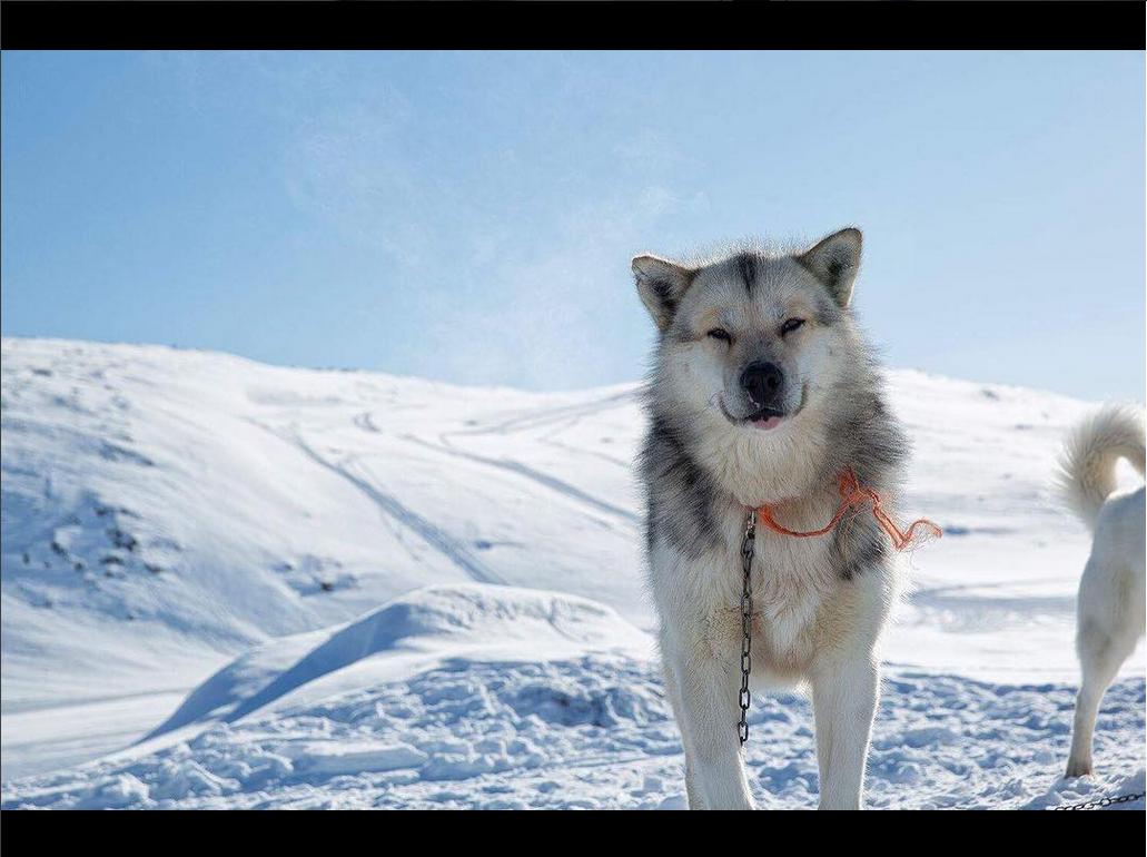 @arcticcirclerace – Verdens hårdeste langrendsløb i Destination Arctic Circle