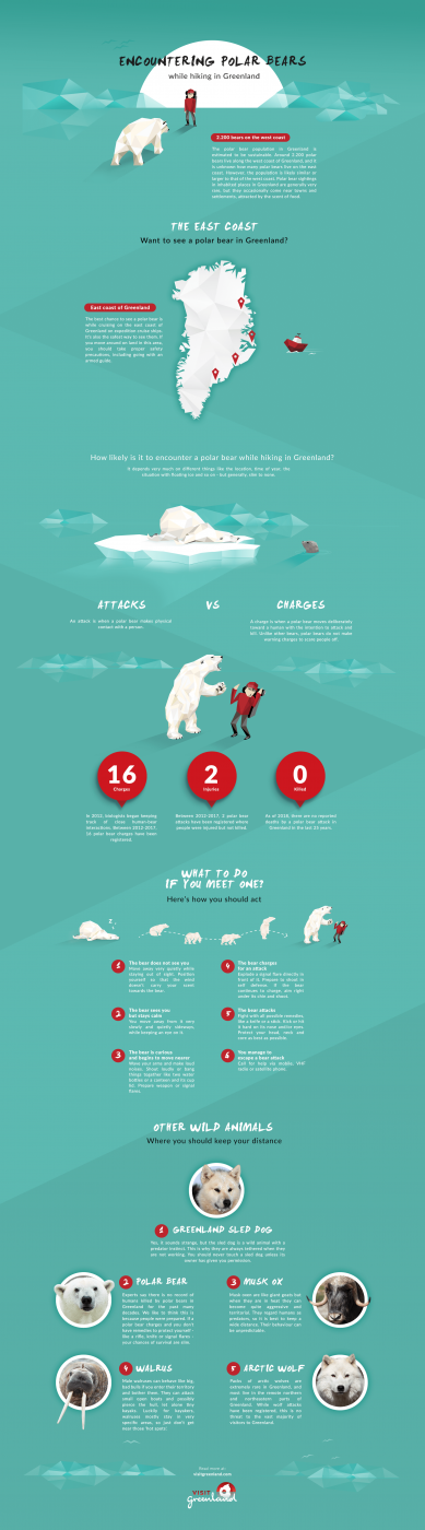 Infographic - Encountering polar bear while hiking in Greenland - by Visit Greenland