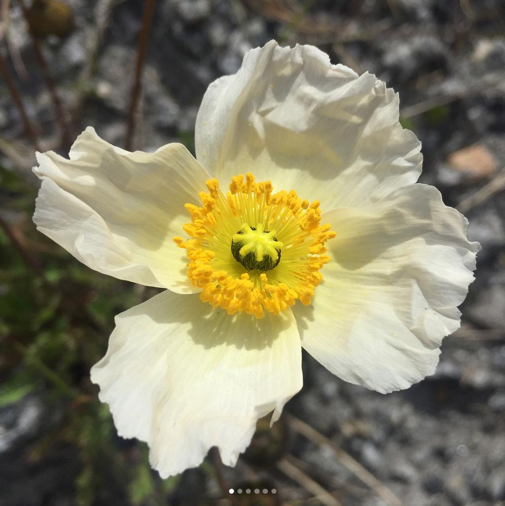 @idabdj – Botanikerens perspektiv