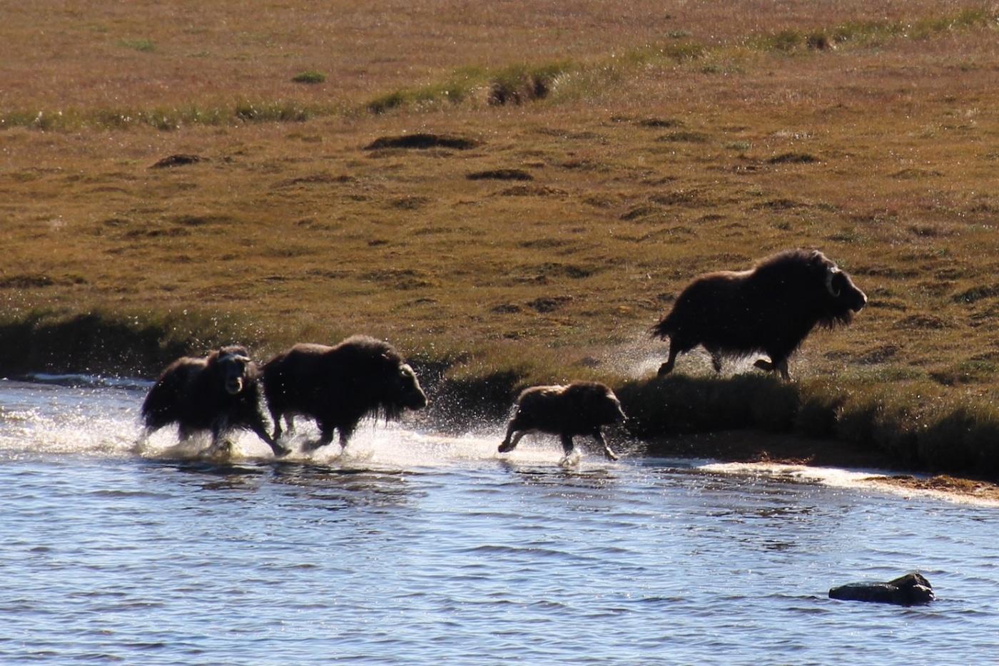 North Safari Travel: Summer Safari Juli 2019