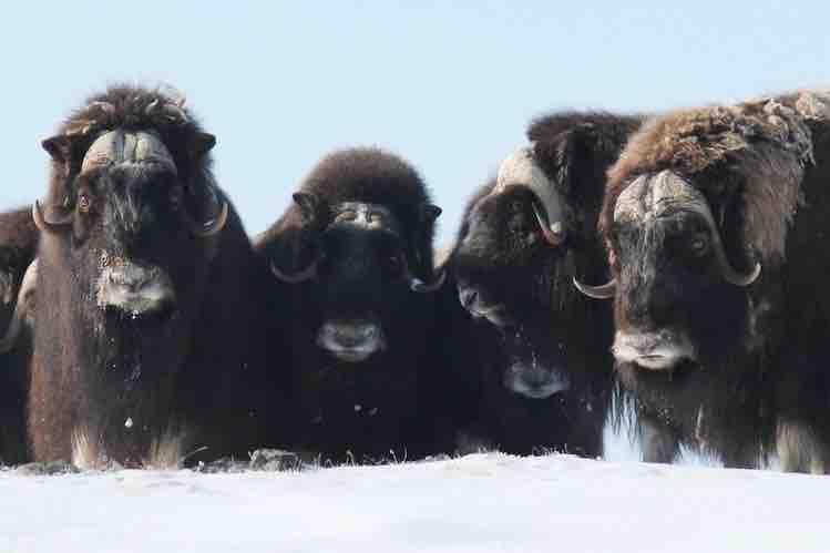 North Safari Travel: Winter safari