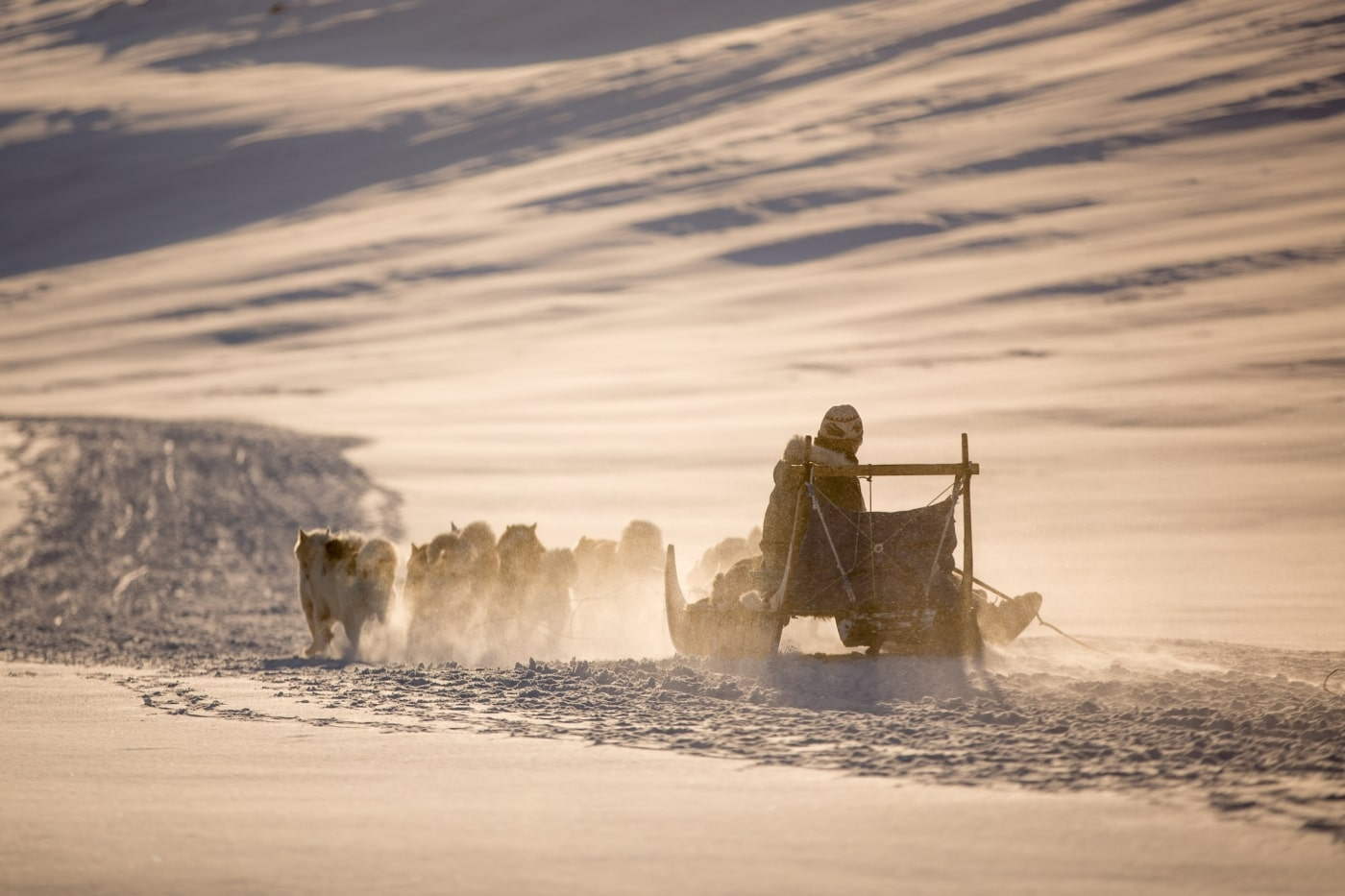 A dog sled heading home towards Sisimiut in Greenland in the setting sun. Photo by Mads Pihl - Visit Greenland.