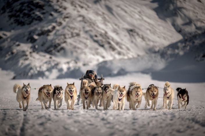 A team of dogs bringing a driver and his guests brack towards Sisimiut in Greenland. Photo by Mads Pihl - Visit Greenland.