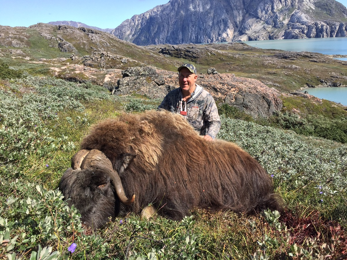 Bowhunting Greenland: Muskox Hunting 2019 rifle