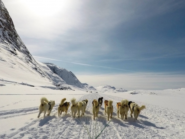 Dogsledding point of view on ice in Greenland. Photo by Diskobay Tours