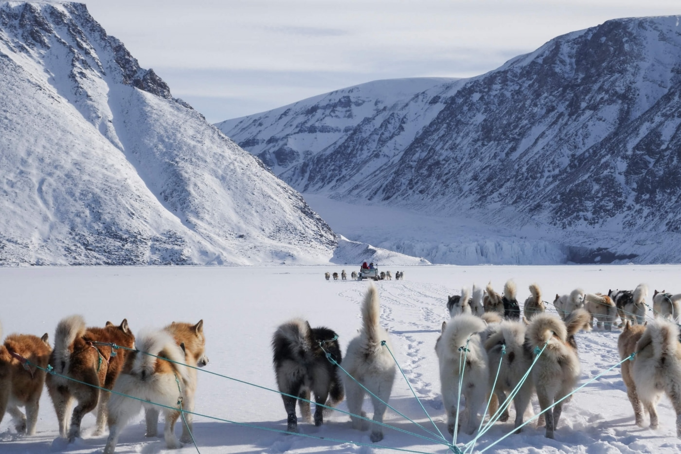 Running Dogs. Photo by Kim Insuk