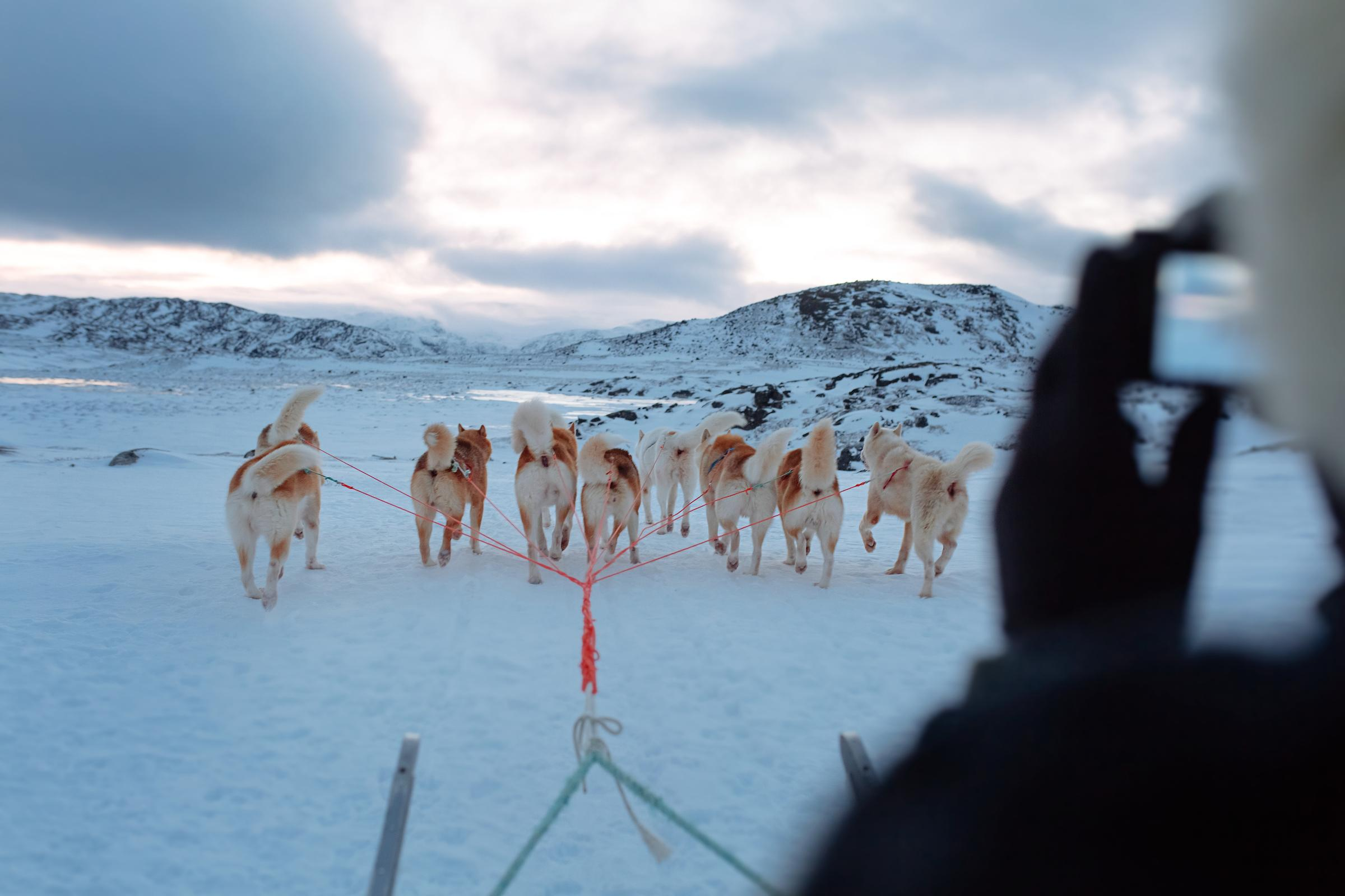 Tourist taking pictures from a dog sled near Ilulissat in Greenland. Photo by Rebecca Gustafsson - Visit Greenland