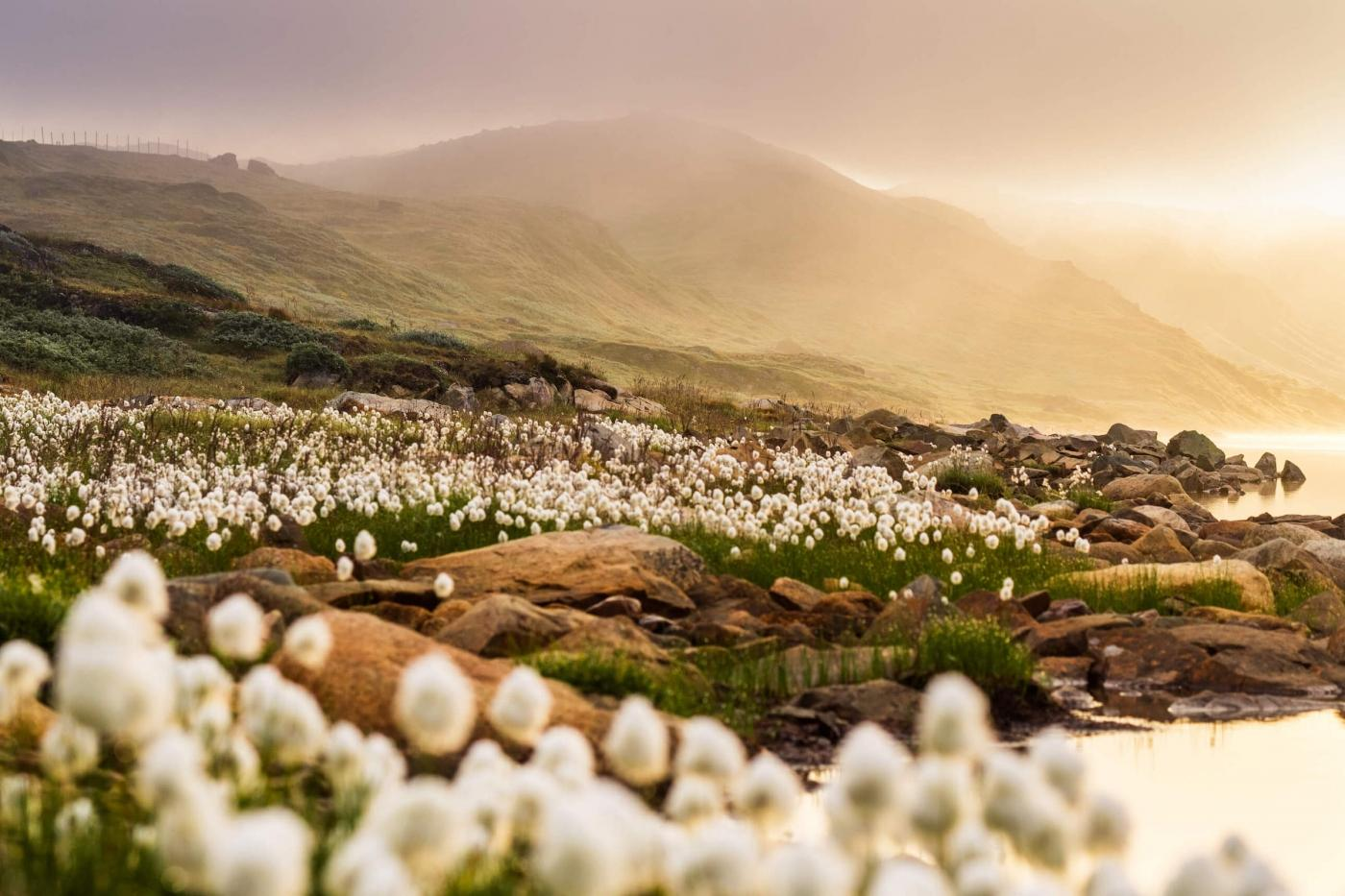 Sun shining on a field of flowers during golden hour.