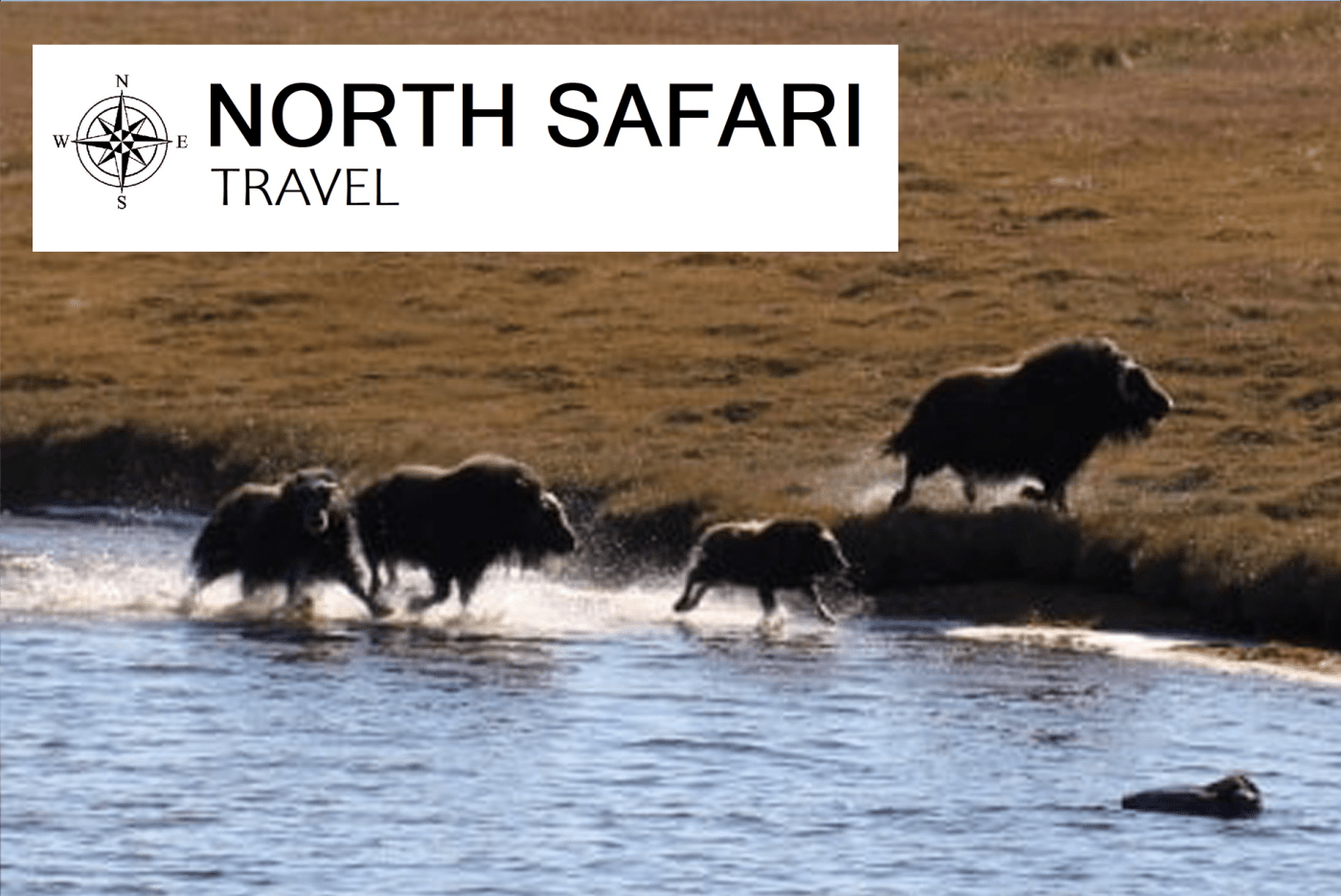 North Safari Travel: Summer Safari July