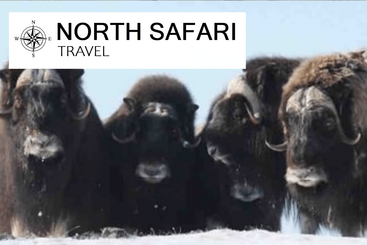 North Safari Travel: Winter safari in march/april