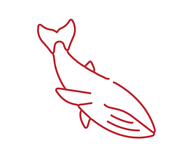 lined icon of a whale