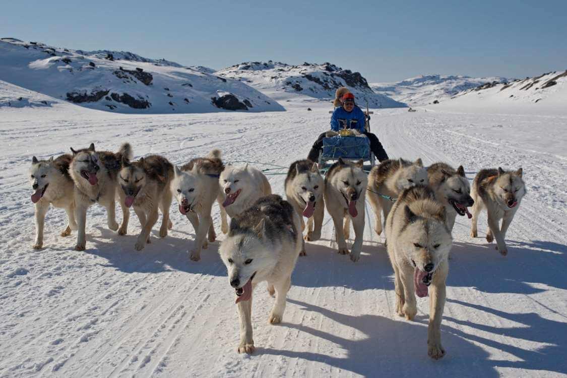 Dog sledding trip near Disko Bay. Photo by Thomas Eltorp, Visit Greenland
