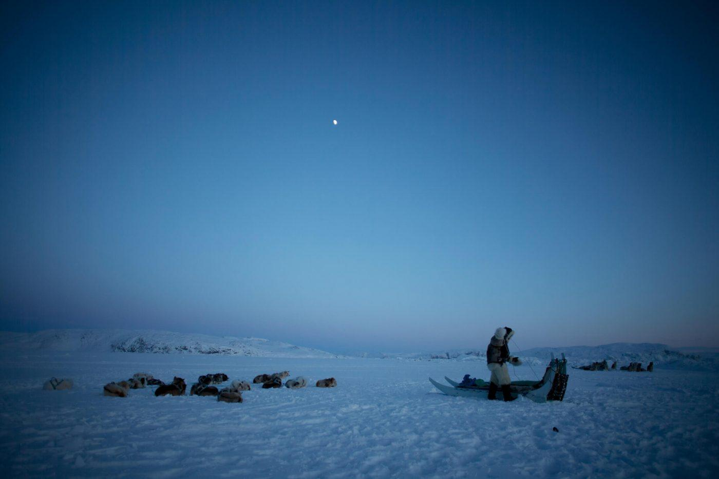 Dog sled driver and dogs, dawn. By David Trood