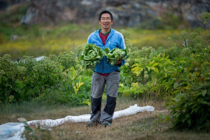 A gardener from Upernaviarsuk research station with fresh lettuce in South Greenland. By Mads Pihl