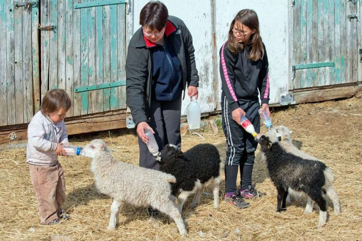 Locals feeding lambs with milk in bottles. Photo by Blue Ice Explorer, Visit Greenland.