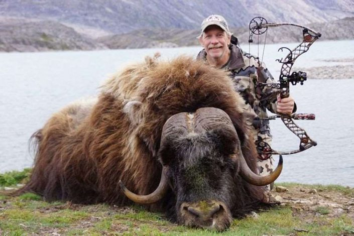 Man standing beside a musk ox shot by bow in Greenland. Photo by Bowhunting Greenland, Visit Greenland.