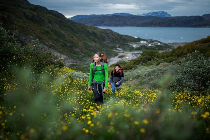 Hiking up through yellow flowers in Narsarsuaq. By Mads Pihl