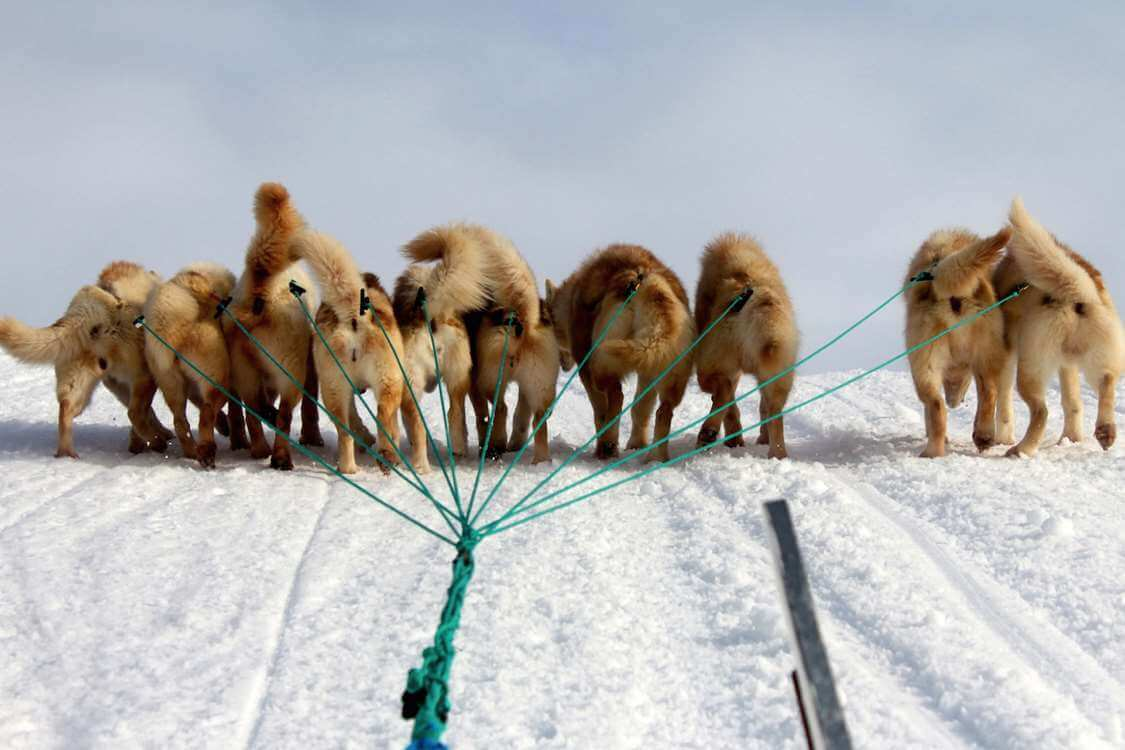 Dogs pulling a sled on a tour around Aasiaat. Photo by Hotel Aasiaat Seamen's Home
