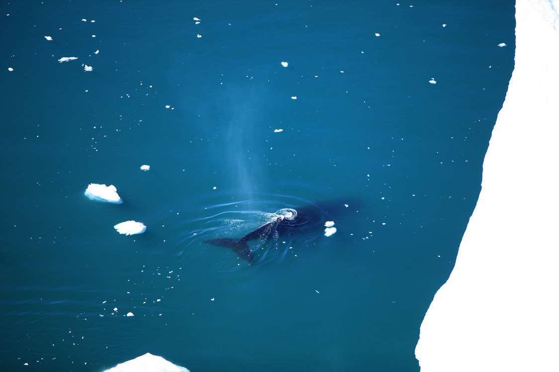 Ilulissat Tourist Nature 17