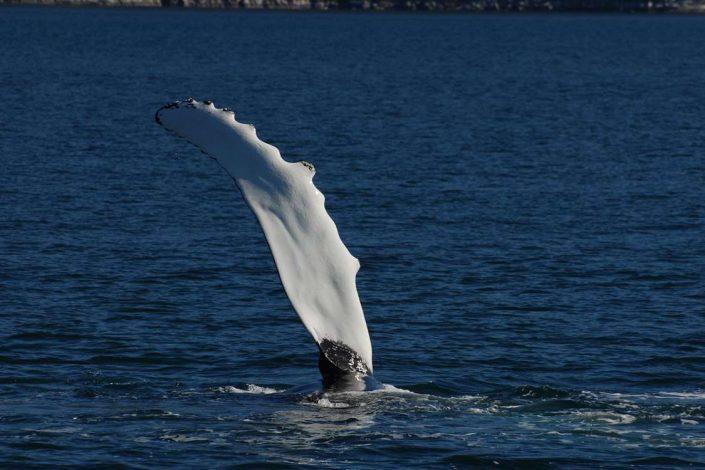 Ilulissat Water Taxi 02