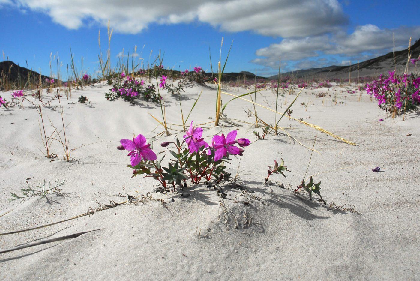 Kangerlussuaq. Photo by Signe Vest