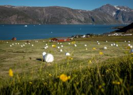 A newly harvested grass field in the sheep farming community Qassiarsuk in South Greenland