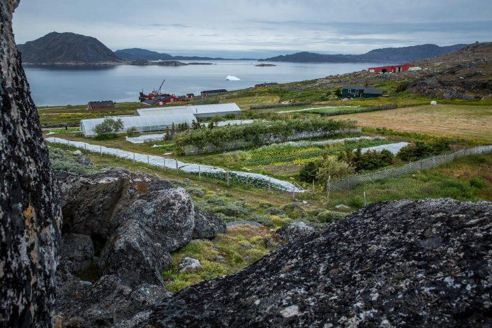 Upernaviarsuk research station and farmin school in South Greenland. Photo by Mads Pihl
