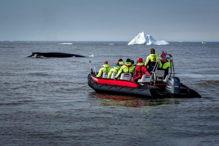 A whale safari near Qeqertarsuaq in Greenland